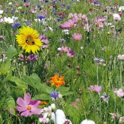 Prairie fleurie: Place aux abeilles - 30 M² - 200Gr